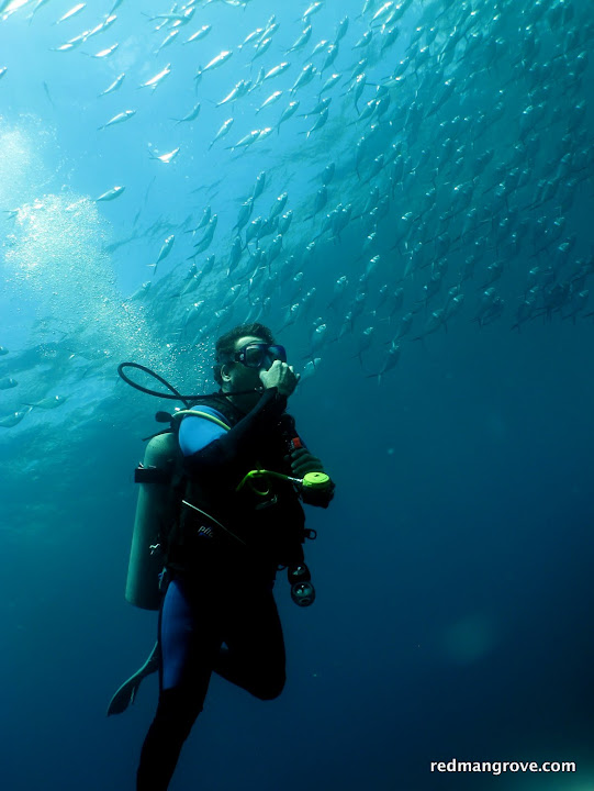 Top 5 Misconceptions about Diving in Galapagos