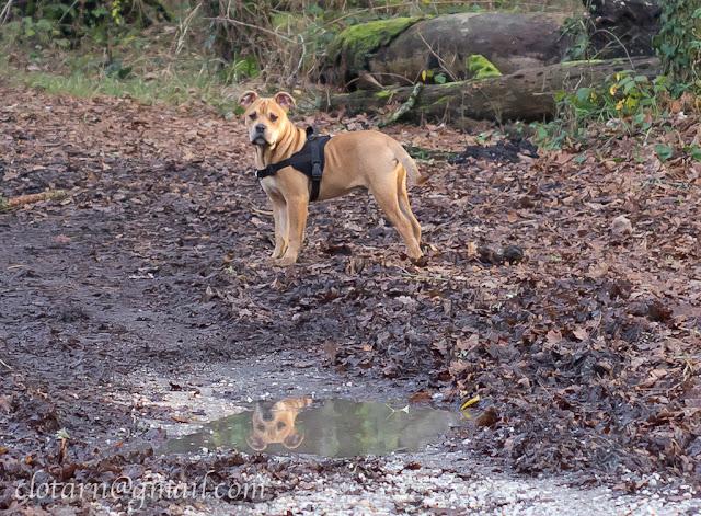 Rencontre canine du forum en région bordelaise (33) - Page 2 Balade33-0620-2