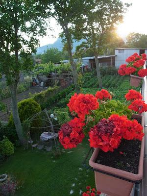 宿の庭と菜園
