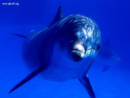 Delfino nel blu