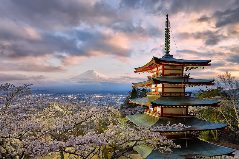 An old pagoda and a sea of cherry blossoms frame the beautiful and timeless shape of Mt. Fuji in Japan. Photographer Elia Locardi