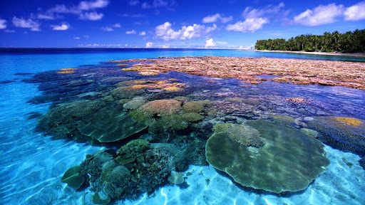 Coral Reef, Marshall Islands, Majuro Atoll.jpg