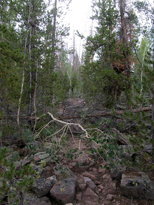 The trails along Rock Creek and Fish Creek were completely unmaintained. We must have had to climb over more than 50 trees like this.