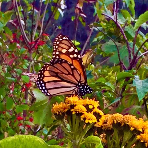 Nancy Morgan Photo 26