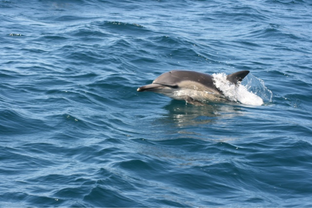The dolphins follows us all the way back to the main island