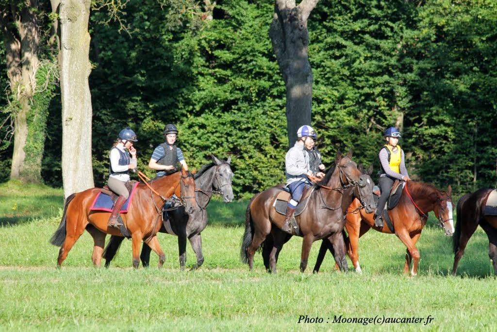 Photos Maisons-Laffitte entrainement 31-07-2014 IMG_2538