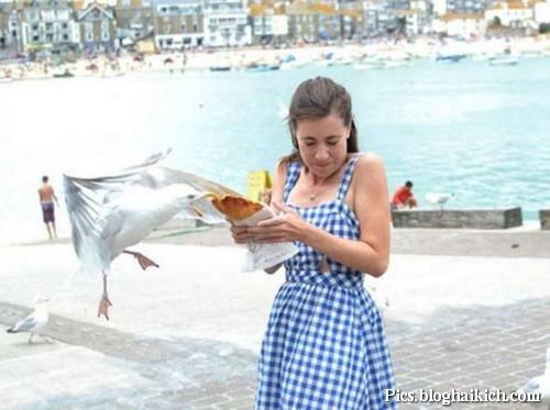 Hình chú chim ăn giựt