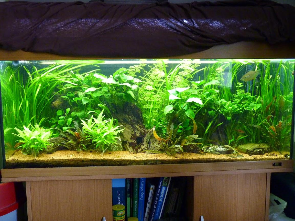 Ma petit histoire Aquariophile de 2009 à aujourd'hui  P1060193