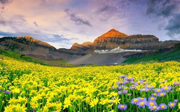 Медоносная флора в Гималаях