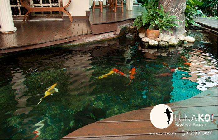 Độ sâu hồ cá Koi