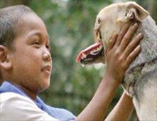أمريكا تتكفل بنفقات علاج كلب بطل فقد أنفه