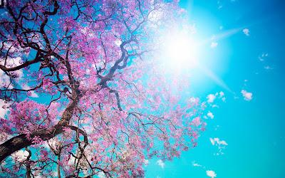 Blauwe lucht met boom in bloei
