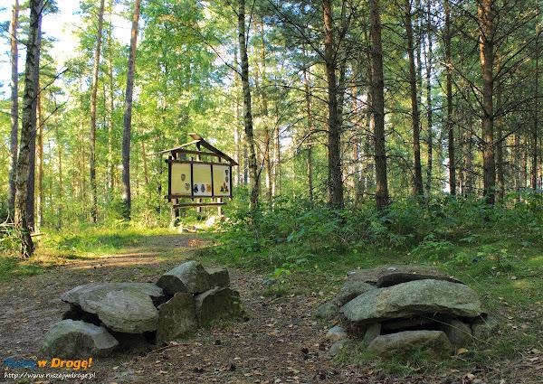 Kręgi Kamienne na Kaszubach - groby skrzynkowe w Leśnie