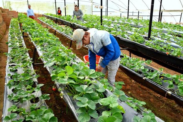 Đơn hàng nông nghiệp cần 21 nữ làm việc tại Hokkaido Nhật Bản tháng 10/2017