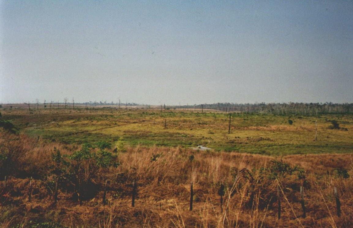 Abgeholzter Regenwald südlich von Belem