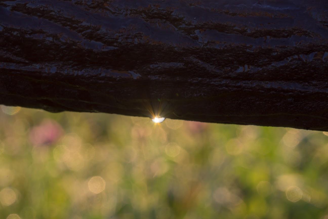 水滴に煌めく朝陽