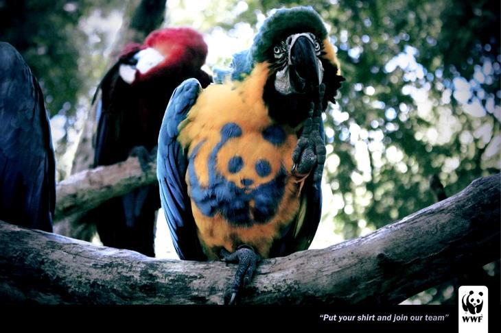 I Love WWF!