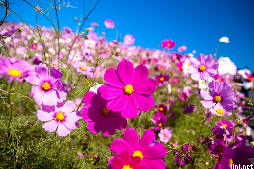 ảnh những cánh hoa rực rỡ sắc màu trong xuân