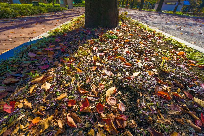 府中の森公園 紅葉 写真13