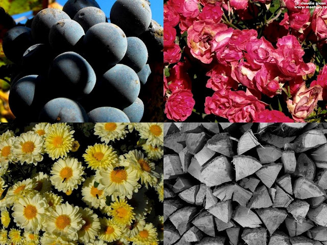 adunaturi de toamna: struguri, trandafiri rosii, tufanici si lemne stivuite