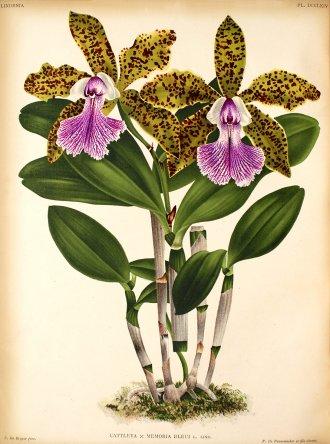 Растения из Тюмени. Краткий обзор - Страница 2 Untitled