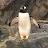 Jackie Guerrero avatar image