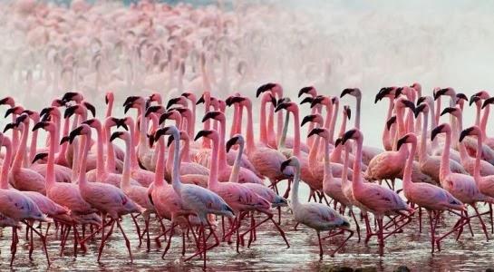 Férias no Quénia - Lago Nakuru