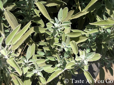 Sage at Los Tamarindos in Los Cabos, Mexico - Photo by Taste As You Go