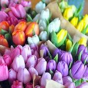 К чему снятся тюльпаны?