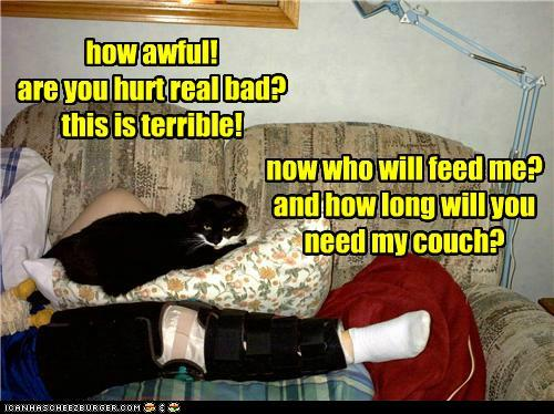 photo of a cat laying next to an injured guy on a couch asking: who's going to feed me etc
