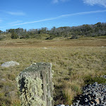 Old fence post at Boggy Plain (268958)