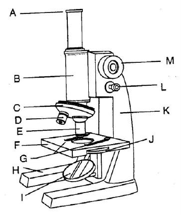 bagian-bagian_mikroskop