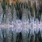К чему снится темный лес?
