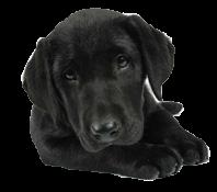 Chelsea Dogs Sale
