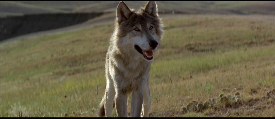 dance with wolf Dances with wolves is a 1990 american epic western film starring, directed and produced by kevin costner it is a film adaptation of the 1988 book of the same name by michael blake that tells the story of a union army lieutenant who travels to the american frontier to find a military post, and of his dealings with a group of lakota indians.