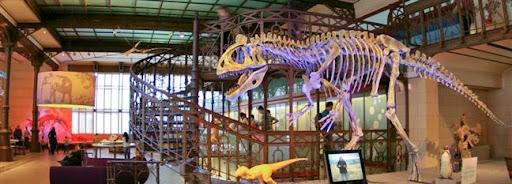 Bruselas Valonia: museo de ciencias naturales