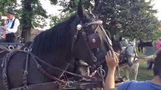 Szüreti bál Jákó 2013.09.21. - Köszöntő a faluház udvarán