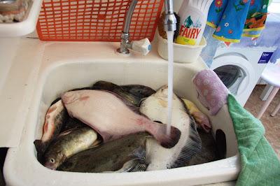 Камбала моется