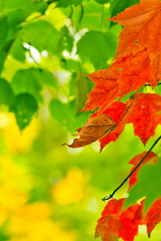 iPhone4 Wallpapers Beautiful Nature Red Leaves on Autumn Background