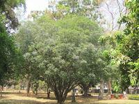 https://lh4.googleusercontent.com/-1DaEoZVgpuY/T3RbJozpWaI/AAAAAAAAAFs/c3UgkIda6Ds/s1600/Tree+Of+Life+Tree+-+Canopy.jpg