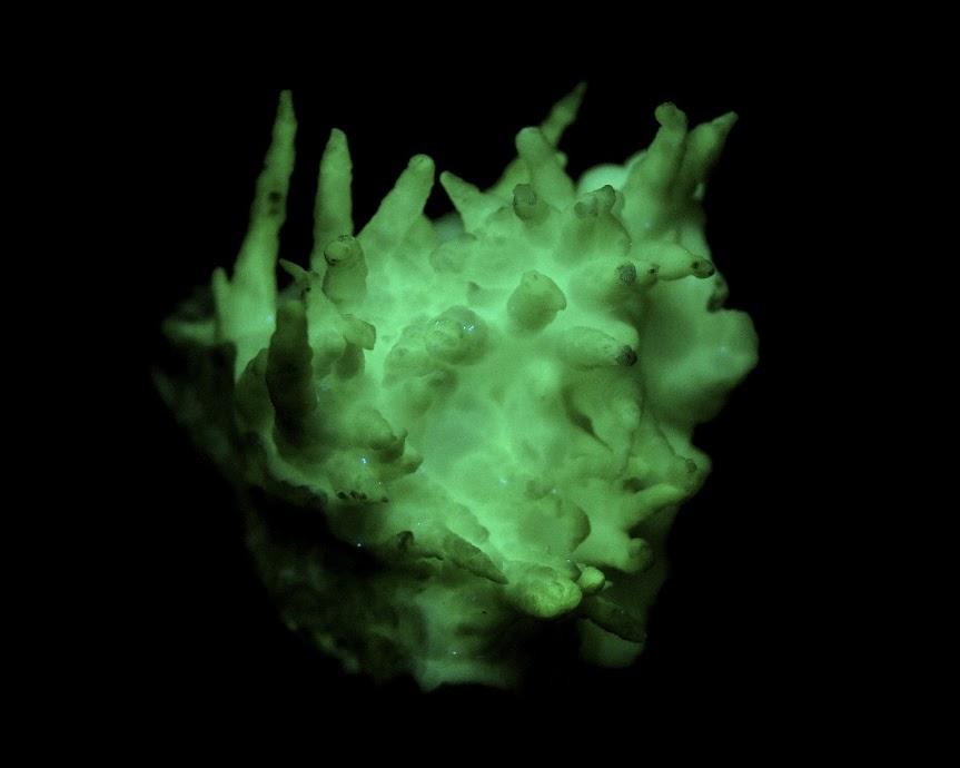 Colección de Minerales Fluorescentes _DSC4522