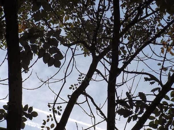 Ситлуэты деревьев