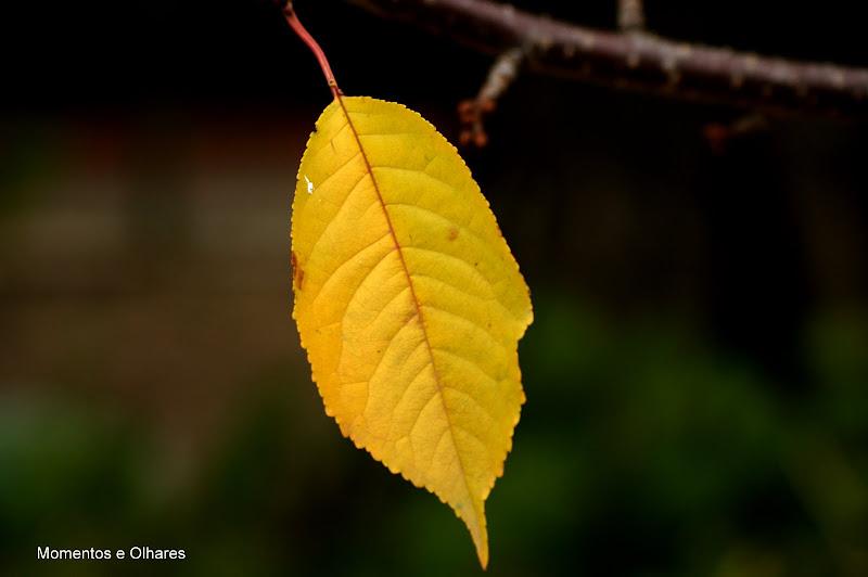 Uma Folha no Outono