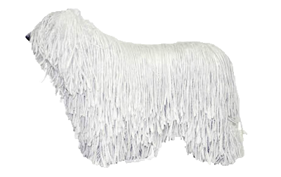 Komondor beds, collars and accessories at Chelsea Dogs
