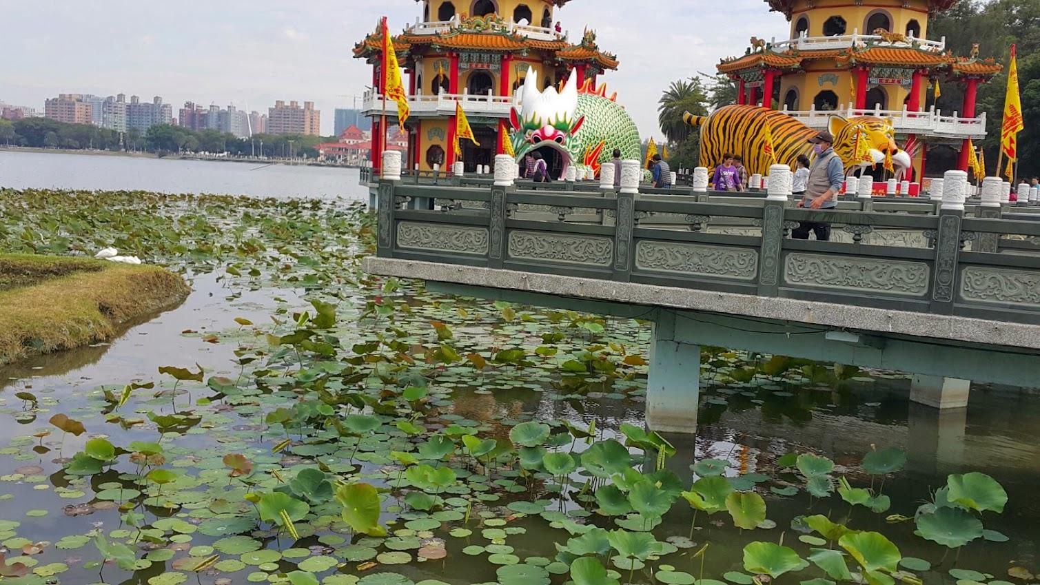 Lotus at the Love river in Taiwan