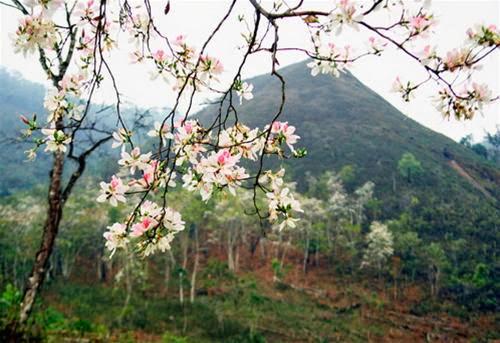feb9016efada54561e8aac43853ae316  Du lịch Mộc Châu những mùa hoa