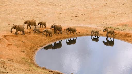 African Elephants by a Water Hole.jpg