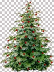 ChristmasTree~LM.jpg