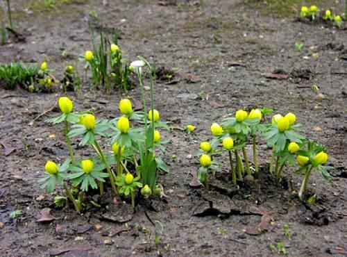 Pagan Eye Signs Of Spring
