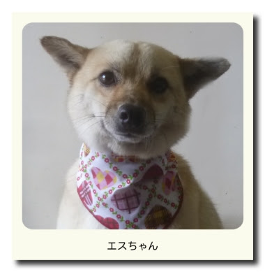 MIX犬のエスちゃん
